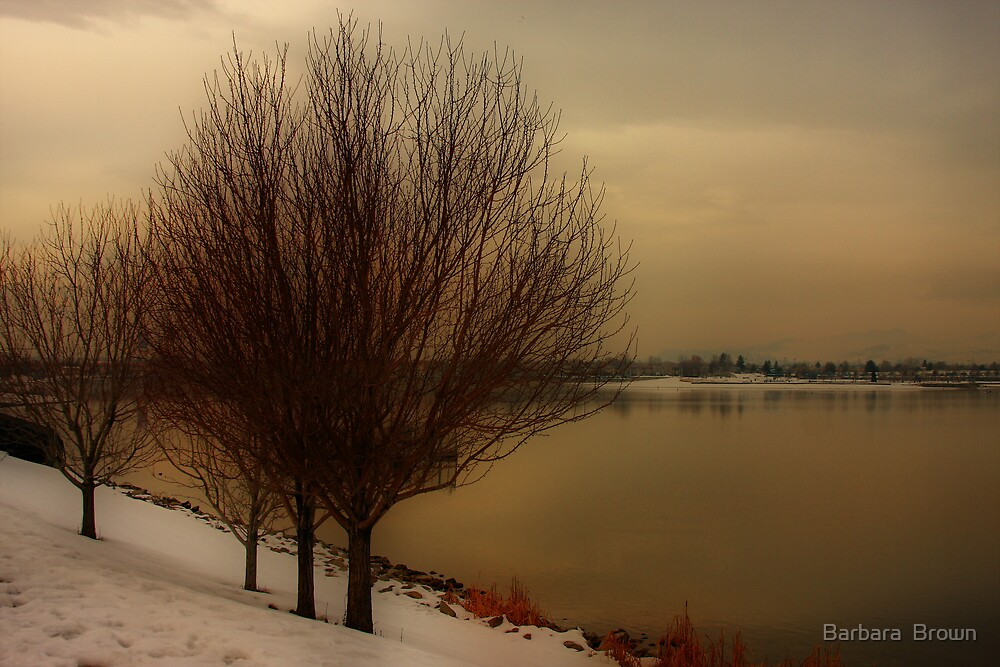 Wintery by Barbara  Brown