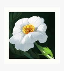 Matilija Poppy Art Print