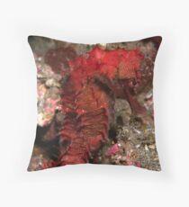 thorny seahorse - hippocamps hystrix Throw Pillow