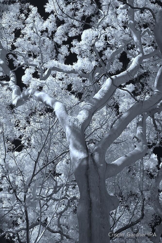 IR Tree by Crispin  Gardner IPA
