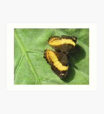 Golden Wings- Butterfly Close Up Art Print