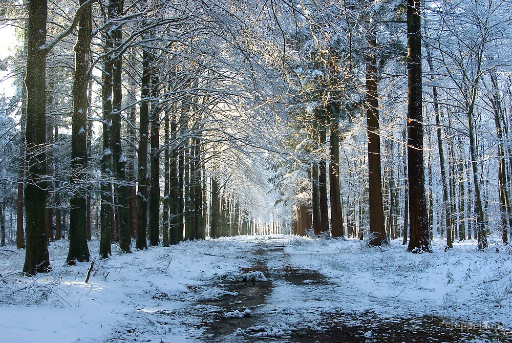 Lane through snowy woods  by steppeland