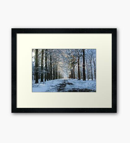 Lane through snowy woods  Framed Print