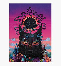 Black Eyed Dog Photographic Print