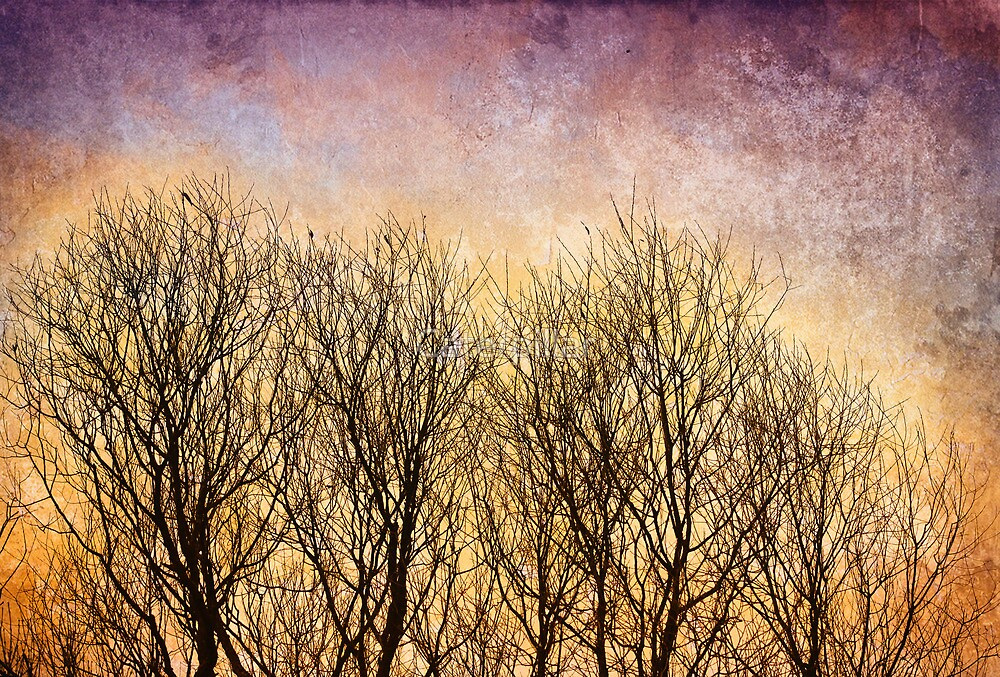 Naked trees by Caterpillar