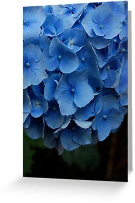 blue butterflies by mellychan