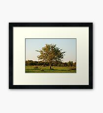 madikwe tree, south africa Framed Print