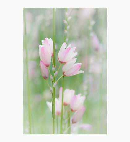 Soft Flowers Photographic Print