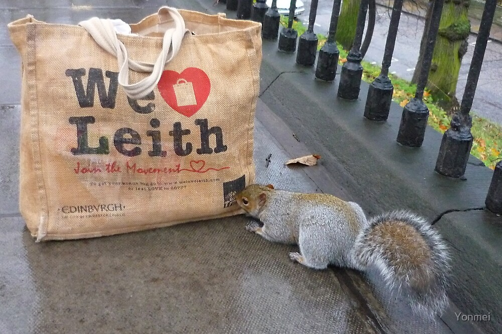 Squirrel: We Love Leith by Yonmei