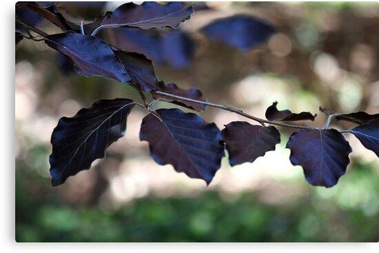 forest dreaming by Karen E Camilleri