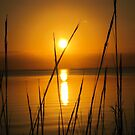 Florida golden sunset by Anthony Goldman