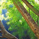 detail of 'Apex Summer Light' by Heidi Schwandt Garner