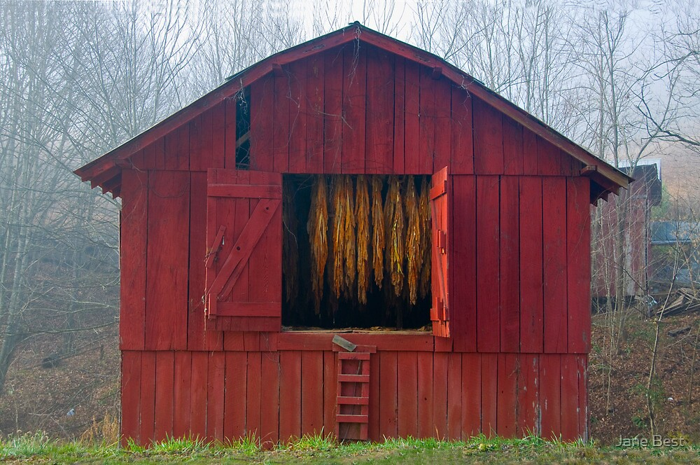 Carolina Tobacco Barn by Jane Best