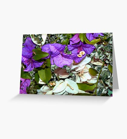White and purple bougainvillea Greeting Card