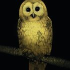 'Night Owl' by richardtclarke