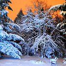 My Snowy Backyard in HDR by Tori Snow