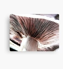 Underneath a field mushroom Metal Print