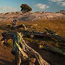 The Summer Tree by Ray Yang