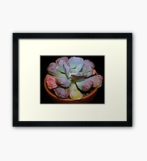Echeveria Hearts Delight Framed Print