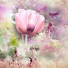 Romantic Poppy by Anivad - Davina Nicholas