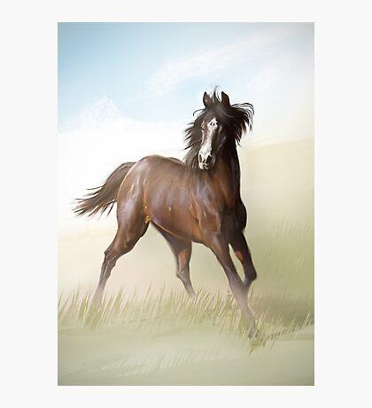 Horsey Photographic Print