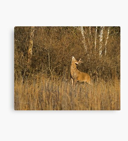 That is some itch !? Canvas Print