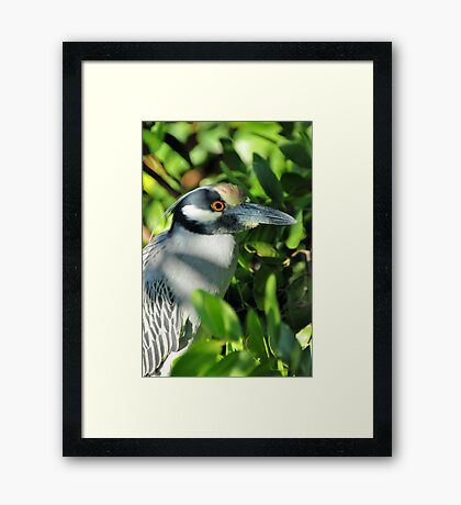 Waiting On Lunch Framed Print