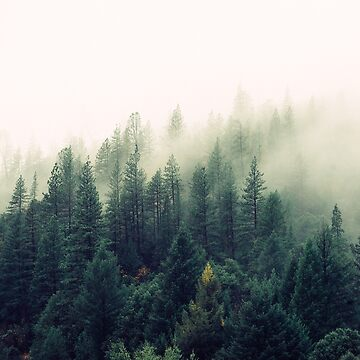 Misty Forest de Orce