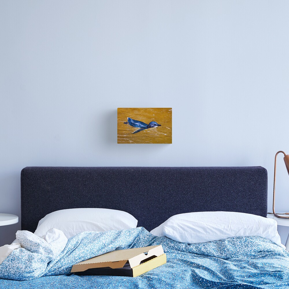 Fairy Penguin Canvas Print