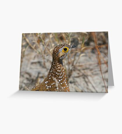 Burchell's Sandgrouse Greeting Card