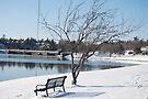 Afternoon winter bench 2 by Brenden Bencharski