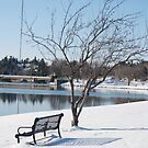 Afternoon winter bench 2 by Brenden Bencharski