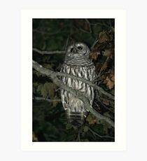 Barred Owl - Mystic, CT Art Print