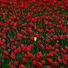 Yellow in Red by Jeffrey  Sinnock