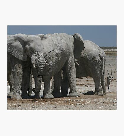 The Elephants and the Oryx Photographic Print