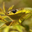 Green Tree Snake by Steve Bullock
