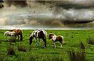 Dartmoor Ponies, Devon, UK by David Carton