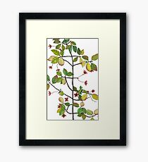 spindle tree  Framed Print