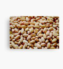 Pistachio Nuts Canvas Print