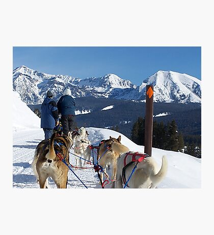 Dog sledding in the mountains! Photographic Print