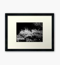 Rime Frost Macro Framed Print