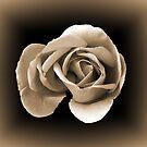 Sepia Rose by Lynn Bolt