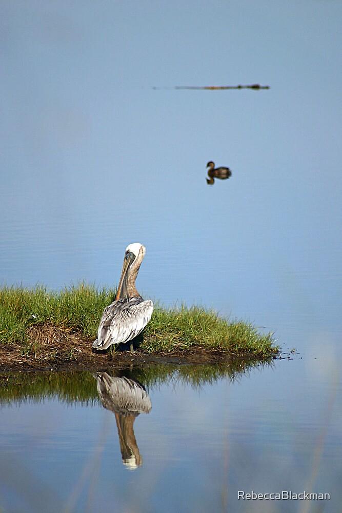 The Pelican, Duck and Gator by RebeccaBlackman