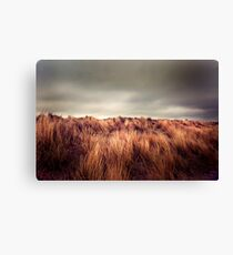 Marram Grass.. Canvas Print