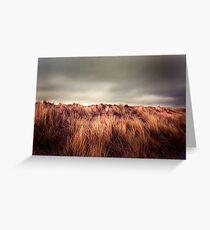 Marram Grass.. Greeting Card
