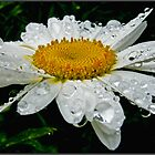 daisy in the rain by Helenvandy