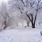 Winter In The Park by Stacy Colean
