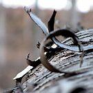 The Wooden Curl by Jonny  McKinnon