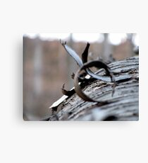 The Wooden Curl Canvas Print