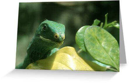 Green Lizard Looks On by TimLloyd